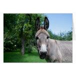 Lovely Donkey Portrait Stationery Note Card