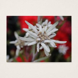 Lovely Edelweiss Leontopodium nivale Business Card