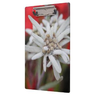 Lovely Edelweiss Leontopodium nivale Clipboard