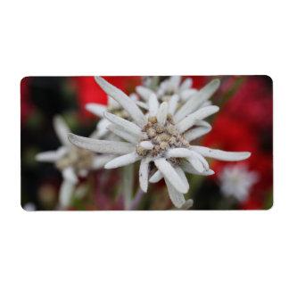 Lovely Edelweiss Leontopodium nivale Label