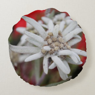 Lovely Edelweiss Leontopodium nivale Round Pillow