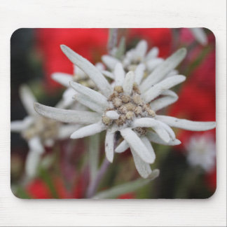 Lovely Edelweiss Leontopodium nivale Mouse Pad