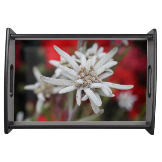 Lovely Edelweiss Leontopodium nivale Service Trays