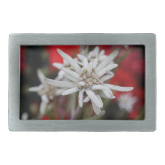 Lovely Edelweiss Leontopodium nivale Rectangular Belt Buckle
