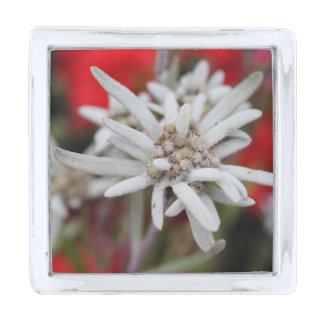 Lovely Edelweiss Leontopodium nivale Silver Finish Lapel Pin