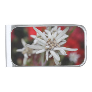 Lovely Edelweiss Leontopodium nivale Silver Finish Money Clip