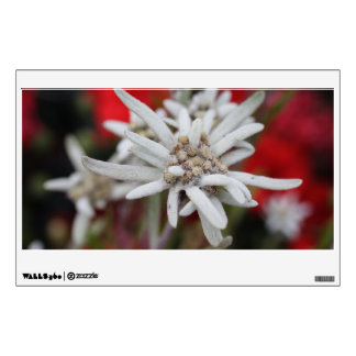 Lovely Edelweiss Leontopodium nivale Wall Decal