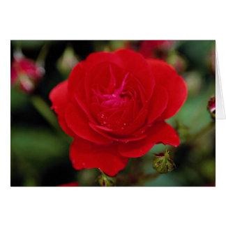 Lovely Floribunda 'Showbiz' Greeting Card