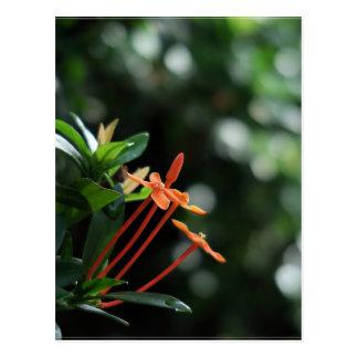 Lovely flower in spring postcard