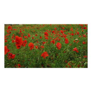 LOVELY FLOWERS POPPIES POSTER
