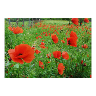 LOVELY FLOWERS POSTER RED POPPIES