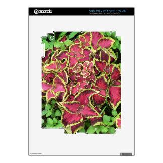 Lovely garden pics 05 iPad 3 skins