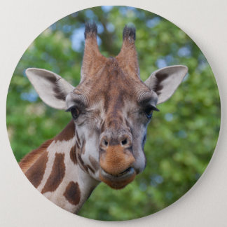 Lovely Giraffe Portrait Pinback Button