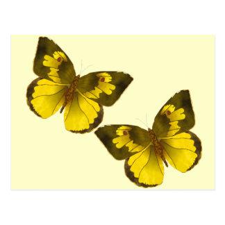 Lovely Golden Butterflies Postcard