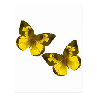 Lovely Golden Butterflies Postcard