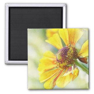 Lovely Golden Helenium Flowers Magnet