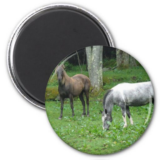 LOVELY HORSES 2 INCH ROUND MAGNET