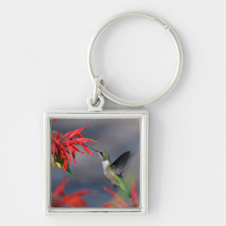 Lovely Hummingbird Silver-Colored Square Keychain