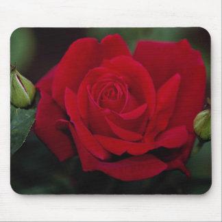 Lovely Hybrid Tea Rose 'Chrysler Imperial' Mouse Pad