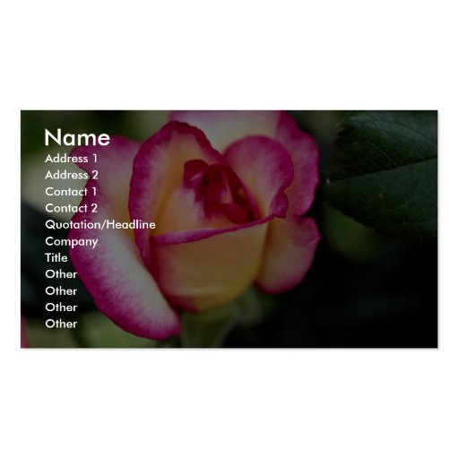 Lovely Hybrid Tea Rose Double-Sided Standard Business Cards (Pack Of 100)