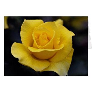 Lovely Hybrid Tea Rose Greeting Card
