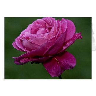 Lovely Hybrid Tea Rose 'Heirloom' Greeting Card