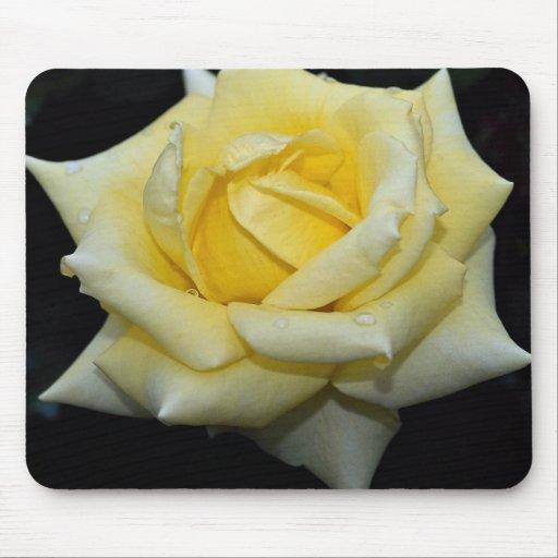Lovely Hybrid Tea Rose 'Helmut Schmidt' Mouse Pad