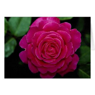 Lovely Hybrid Tea Rose 'Tiffany'leaves Greeting Card
