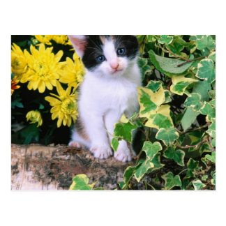 Lovely Kitten 32 Postcard