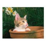 Lovely Kitten 54 Postcard