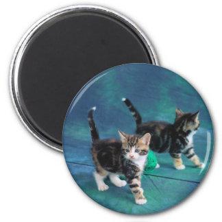Lovely Kitten 61 Magnet