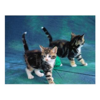 Lovely Kitten 61 Postcard