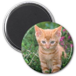 Lovely Kitten 7 Magnet