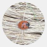Lovely Ladybug Sticker