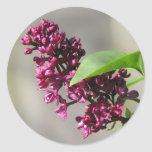 Lovely Lilac Bloom Classic Round Sticker