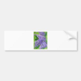 Lovely Lilacs Bumper Sticker