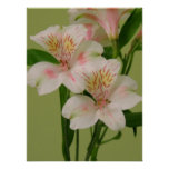Lovely Lilies Posters