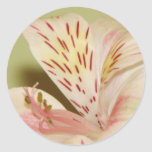 Lovely Lily Round Sticker