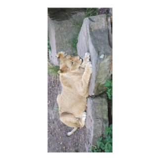 Lovely Lioness Bookmarks Rack Card
