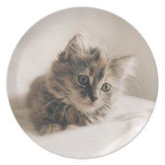 Lovely Little Kitten Cat Kitty Dinner Plate