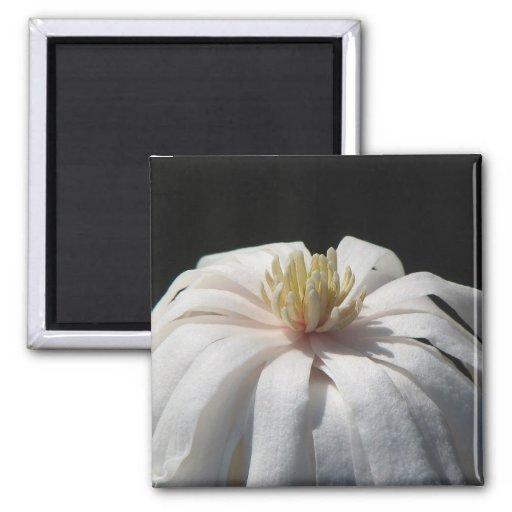 Lovely Magnolia Centennial Refrigerator Magnet