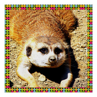 Lovely Meerkat 415P Poster