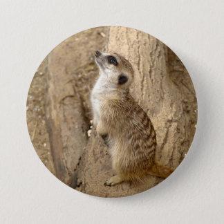 Lovely Meerkat Pinback Button