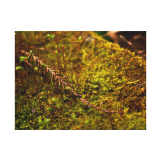 Lovely Moss Canvas Print