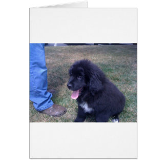 Lovely Newfie puppy (Newfoundland dog breed) Card