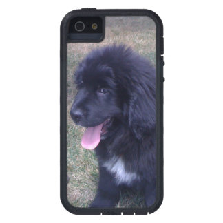 Lovely Newfie puppy (Newfoundland dog breed) iPhone 5 Case