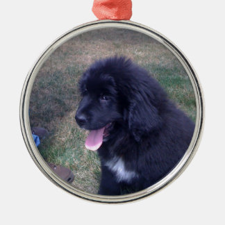 Lovely Newfie puppy (Newfoundland dog breed) Metal Ornament