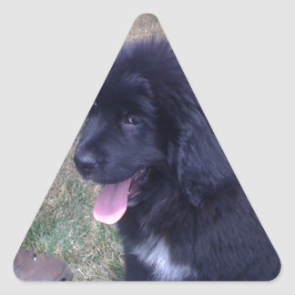 Lovely Newfie puppy (Newfoundland dog breed) Triangle Sticker