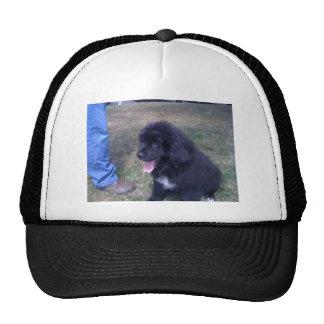Lovely Newfie puppy (Newfoundland dog breed) Trucker Hat
