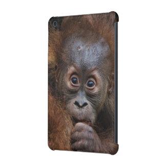 lovely orang baby iPad mini retina case